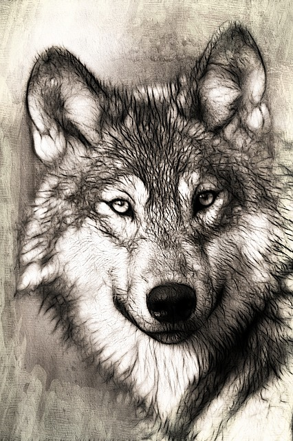 Wolf, Portrait, Head, Predator, Canidae, Canis Lupus