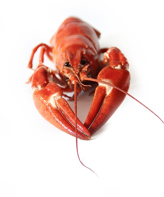 Canker, Crayfish Party, Red, Seafood, Animals