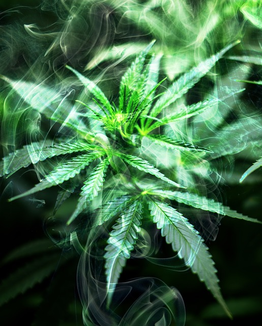 Cannabis, Smoke, Marijuana, Weed, Hemp, Medical, Plant
