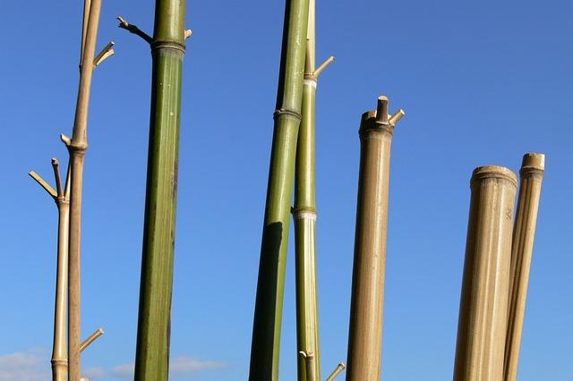 Bamboo, Sky, Cannes, Stems