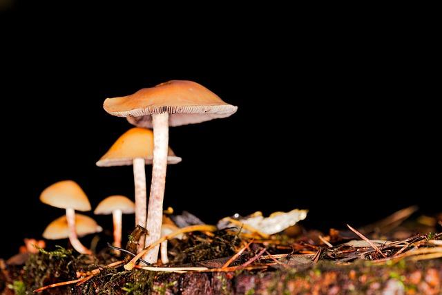 Mushroom, Rac, Toadstool, Cap, Autumn, Nature