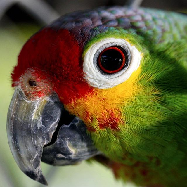 Parrot, Ave, Captivity, Animals, Birds, Color, Peak