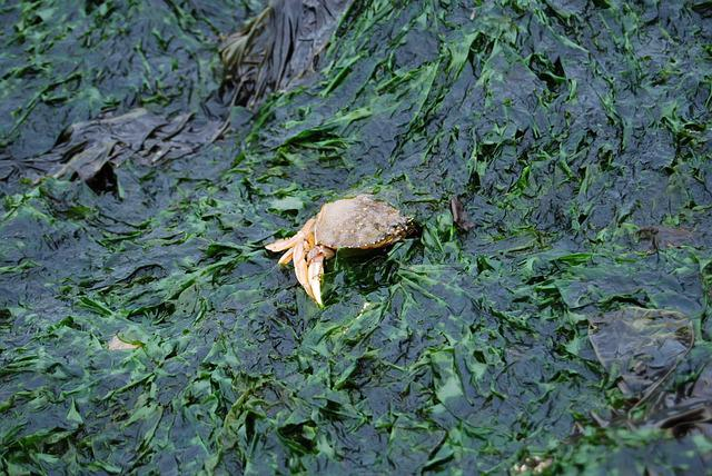 Crab, Seaweed, Seagrass, Captured, Algae, Beach