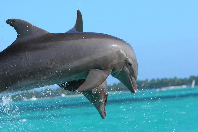 Dolphin, Punta Cana, Caribbean