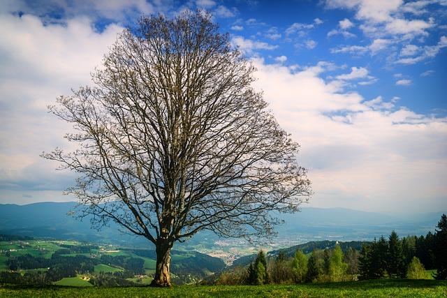 Lavanttal, Carinthia, Austria, Hiking, Tree, Landscape