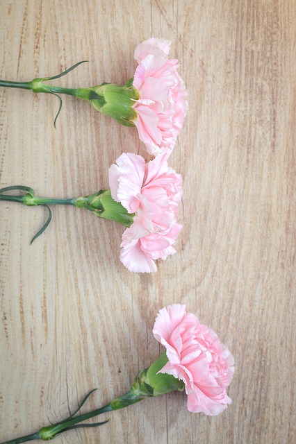 Flowers, Cloves, Pink, Carnation Pink, Pink Flowers