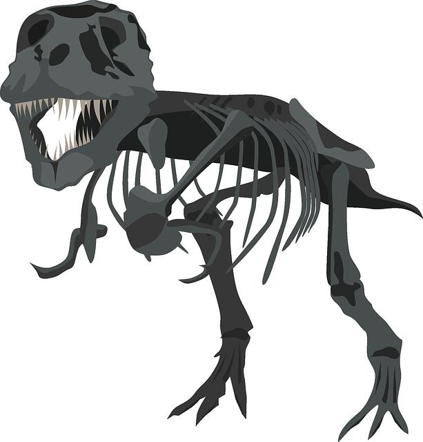 Tyrannosaurus Rex, Dinosaur, Dino, Carnivore, Skeleton