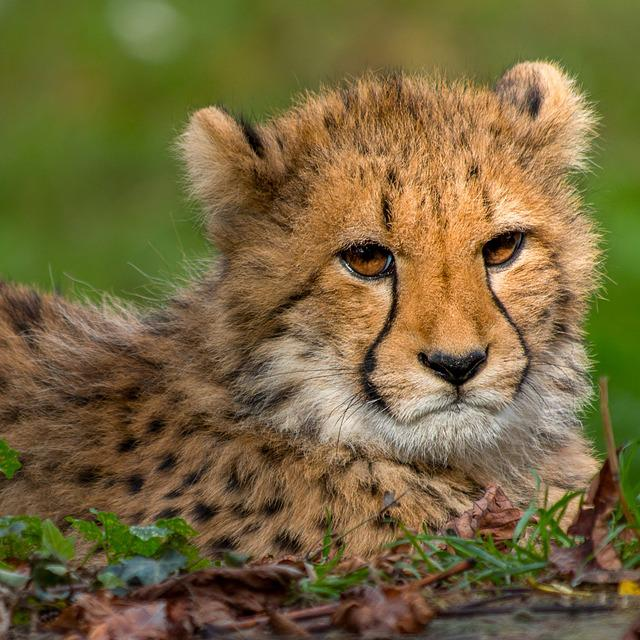 Animal World, Cat, Carnivores, Mammal, Predator
