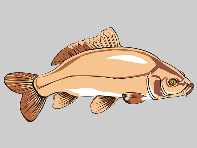 Fish, Carp, Common Carp, Pond, Animal, Fresh Water