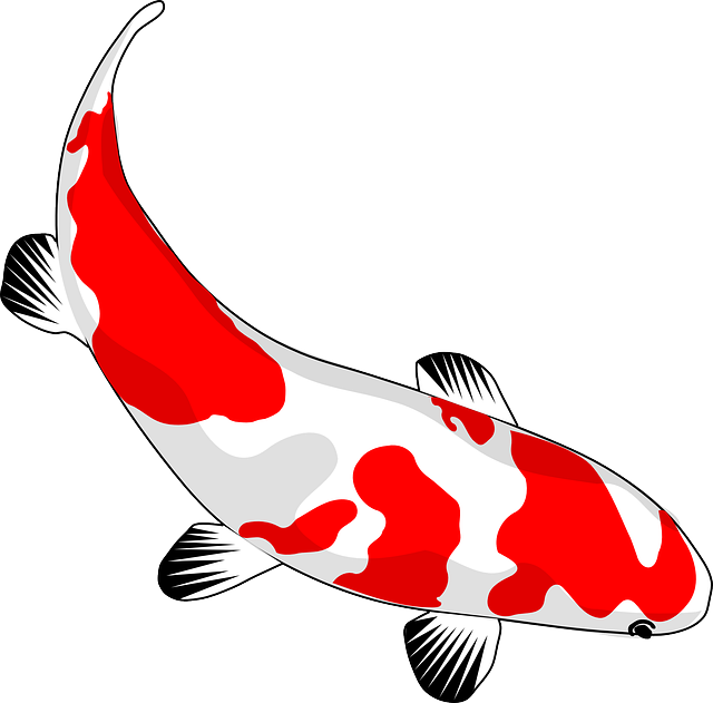 Fish, Koi, Red, White, Nishikigoi, Common Carp, Carp