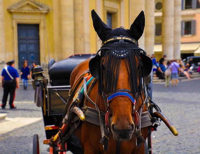 People, Carriage, Street, Cavalry