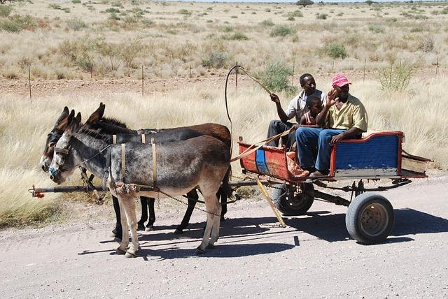 Cart, Donkey Cart, Donkey, Coach, Dare, Rural, Africa