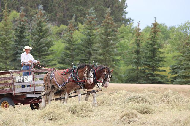 Horses, Wagon, Cart, Team, Horsepower, Nature, Wood