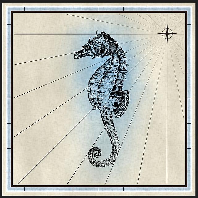 Seahorse, Fish, Animal, Nautical, Cartography, Map