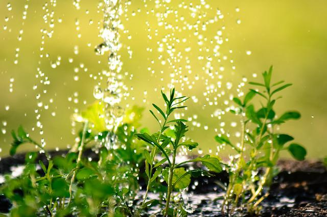 Drop Of Water, Water The Plants, Plug, Casting, Water