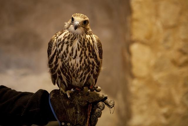 Aguila, Consuegra, Castle Of Consuegra, Castle, Stain