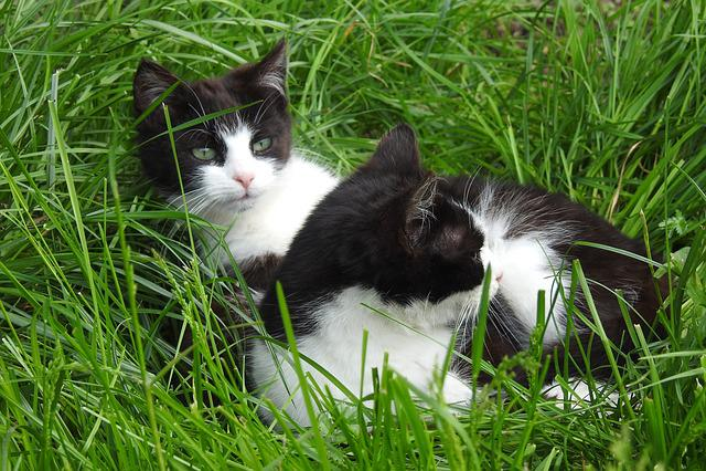 Animals, Charming, Lawn, A Little, Nature, Cat, Mammals