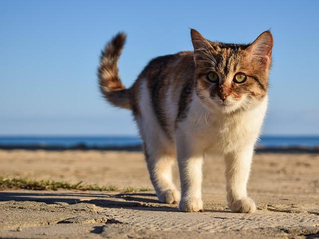 Cat, Stray, Animal, Cute, Young, Face, Eyes, Beach