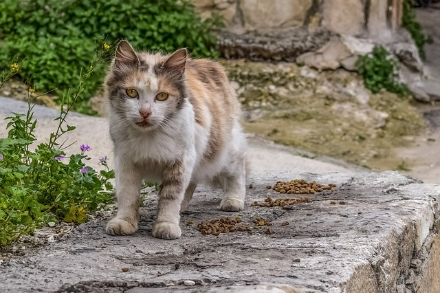 Cat, Stray, Street, Animal, Mammal, Young, Cute, Kitten