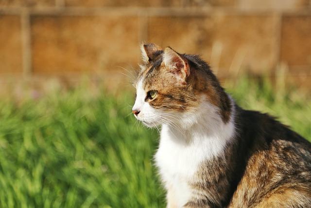 Animal, Cute, Mammal, Nature, Fur, Pet, Young, Cat