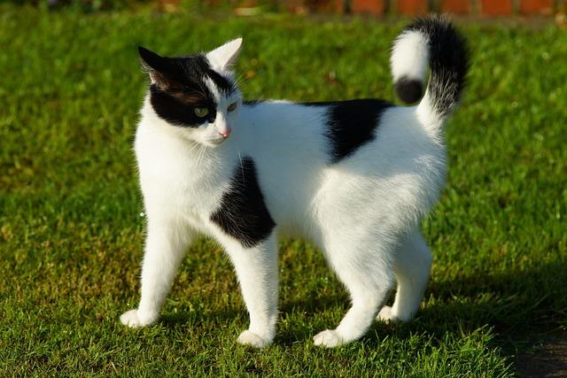 Cat, Female, Attention, Cat Face, Animal, Pet, Mieze