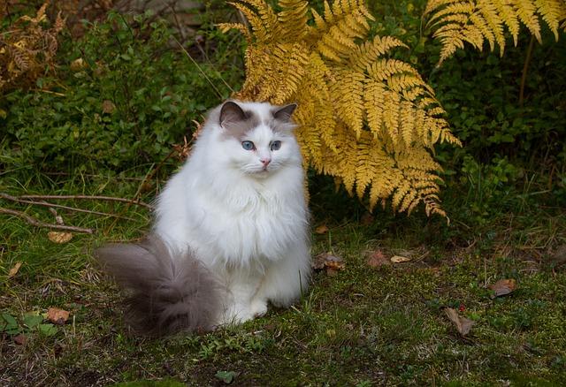 Mammals, Nature, Cat, Cute, Pet, Sit, Animal