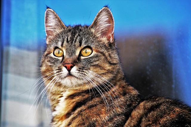 Animals, Portrait, Charming, Cat, At The Court Of, Look