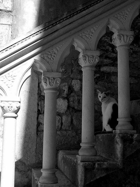 Staircase, Cat, Shadow, Architecture, Stone Fence