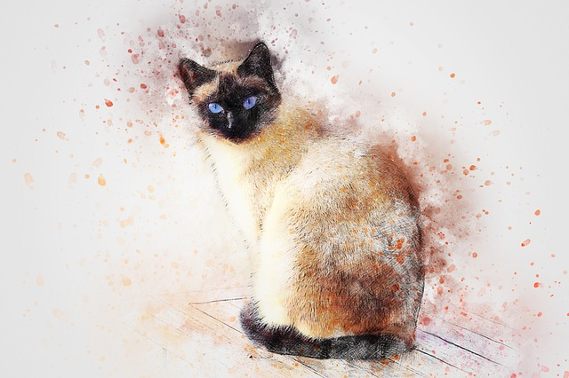 Cat, Siamese, Animal, Art, Pet, Abstract, Watercolor
