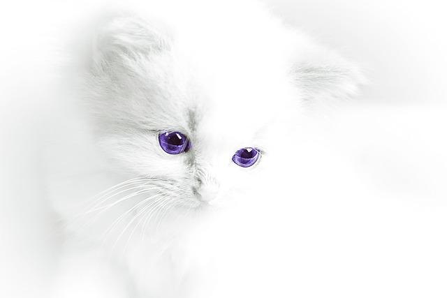 Cat Baby, Cat, White, Domestic Cat, White Cat