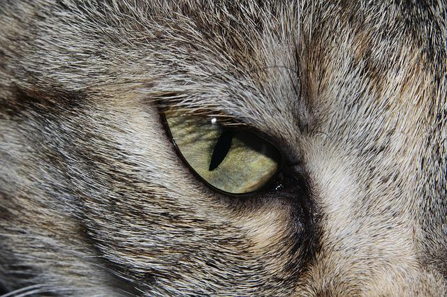 Cat, Cat's Eye, Close, Cute, Beautiful, Animal World