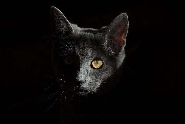 Cat, Animals, Cats, Portrait Of Cat, Cat Face