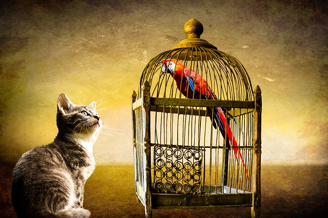 Animals, Cat, Bird, Parrot, Cage, Caught, Security