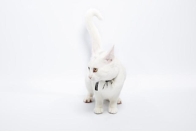 Cute, Animal, Cat, Rabbit, Downy, Pet, Desktop, Negócio