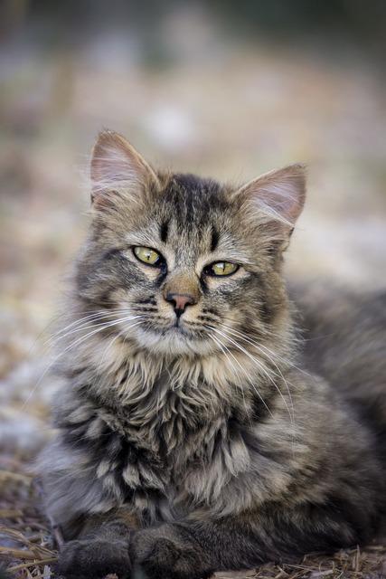 Cat, Nature, Cute, Mammal, Animal, Gray Cat
