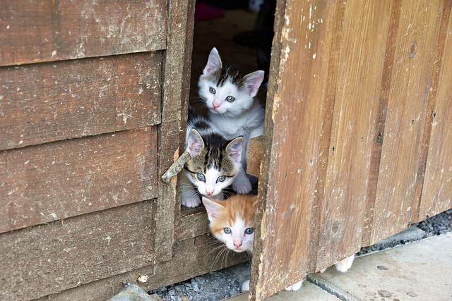 Cute, Cat, Animal, Portrait, Pet