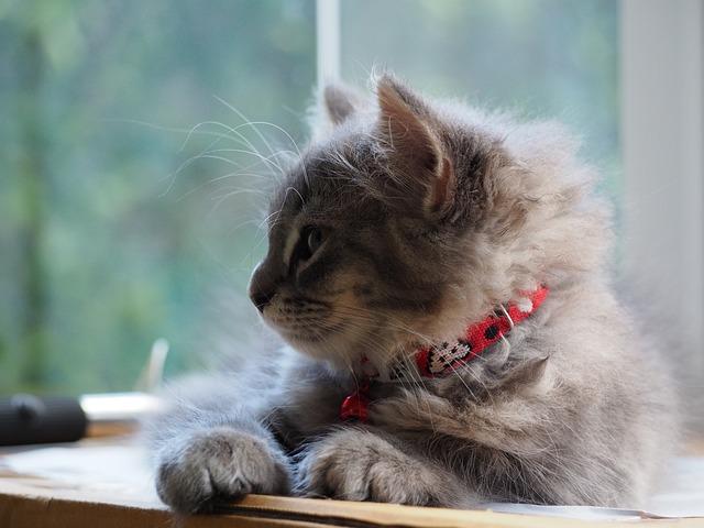 Cat, Asleep, Sleep, Cute, The Sleeping, Relax, Relaxing