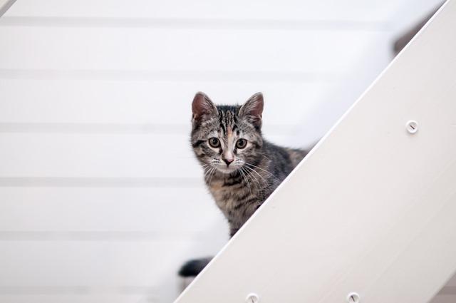 Domestic, Animal Kingdom, Cat, Cute