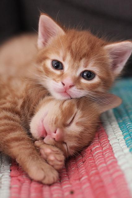 Cute, Cat, Little, Animal, Baby, Funny, Adorable