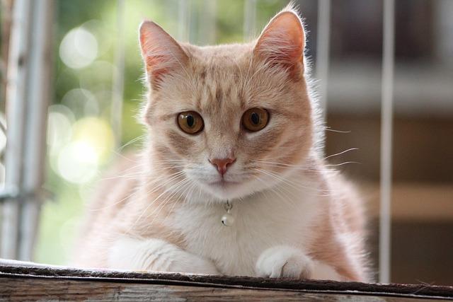 Cat, Cute, Animals, Pet, Kitten, Furry, Nature