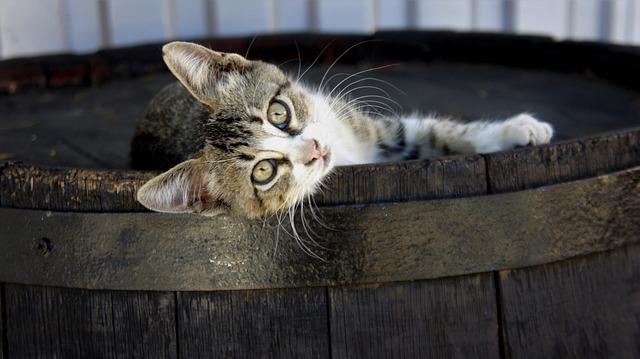 Cat, Kitten, Wooden, Barrel, Cute, Funny, Looking