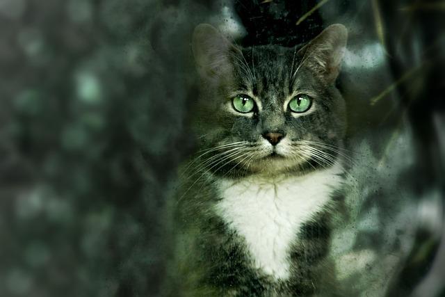 Animal, Cat, Nature, Cute, Mammal, Portrait, Pet