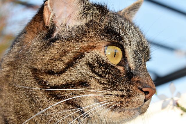 Cat, Animal, Mackerel, Pet, Domestic Cat, Cat's Eyes