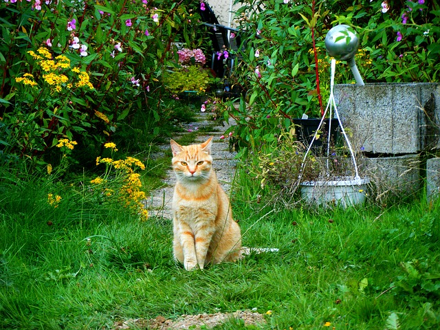 Cat, Garden, Red Cat, Domestic Cat, Pet, Young Cat