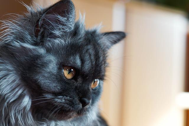 Cat, Eyes