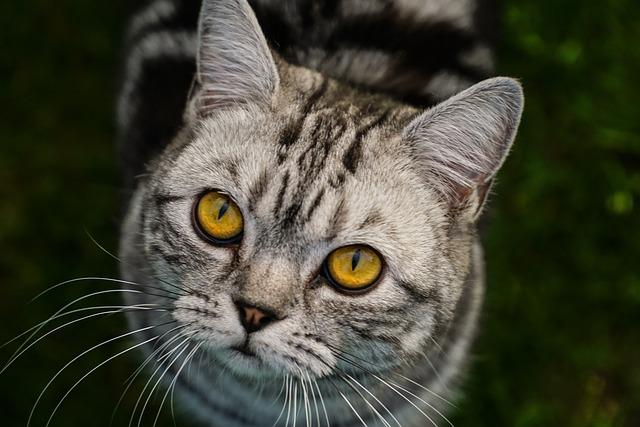 Cat, Close, Animal, View, Head, Domestic Cat, Cat Face
