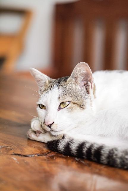 Cat, Cute Cat, Animals, Pet, Cat's Eyes, Cat Face