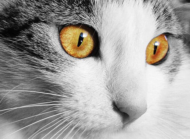 Cat, Home, Animal, Cat's Eyes, Eyes, Pet, View, Face