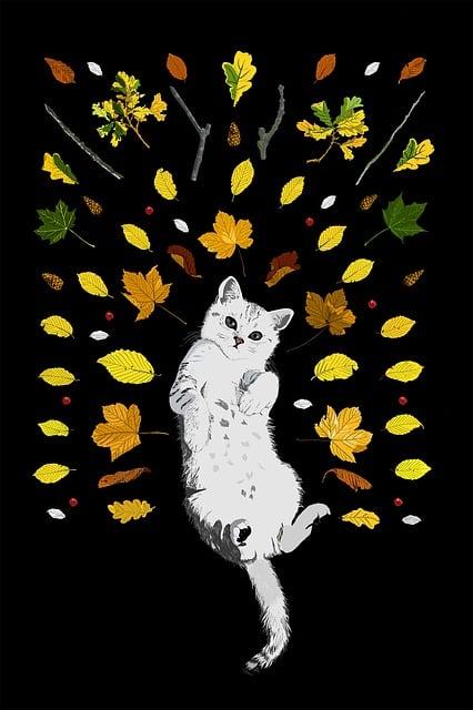 Cat, Autumn, Kitten, Leaves, Fall, Pet, Cute, Feline