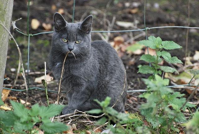 Feral, Cat, Feline